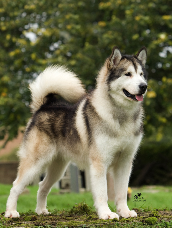 Cute Big Dogs | Cutest Dogs Online