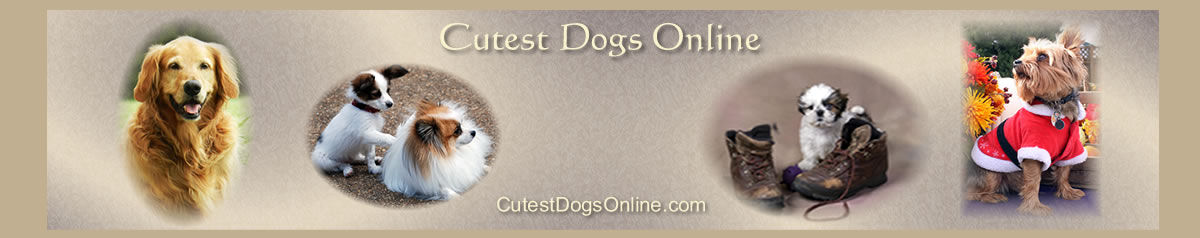 Cutest Dogs Online